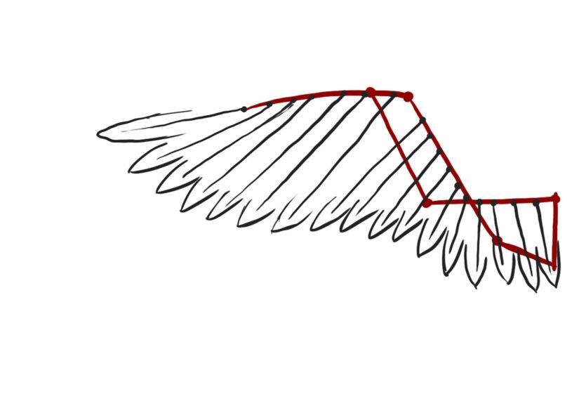 schema ailes articulées